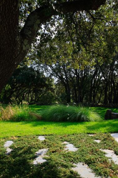 Modernisation D Un Jardin Provencal Conceptuelles